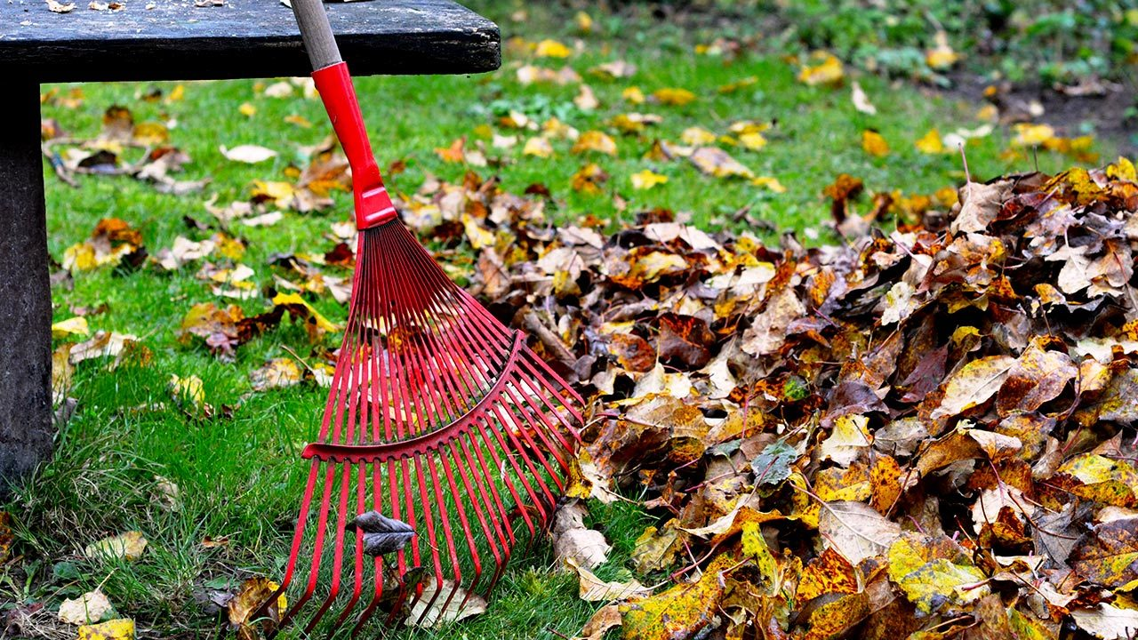 Yard Clean up Dumpster Rental
